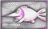 halak férfi